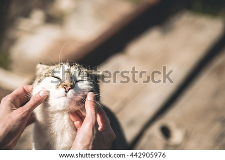 Cute cat receiving some love - stock photo