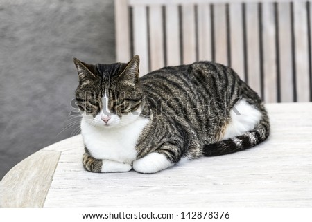cute cat relaxes at the table - stock photo