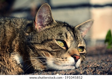 Cute cat relaxes in the streets - stock photo