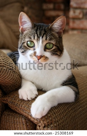 Cute cat relaxing on sofa - stock photo