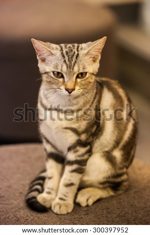 Cute Cat sit on a chair - stock photo