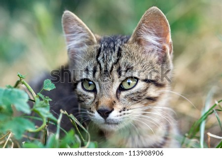 cute cat sits in the grass - stock photo