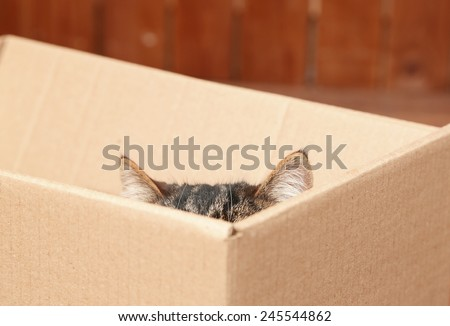 Cute cat sitting in cardboard box - stock photo