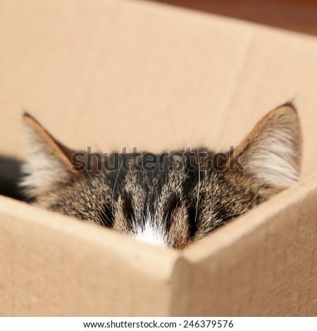 Cute cat sitting in cardboard box - stock photo