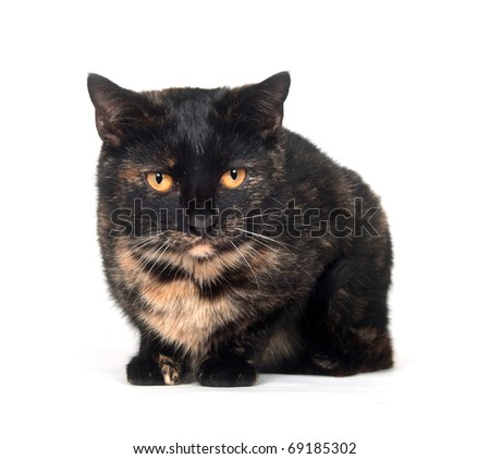Cute cat sitting on white background