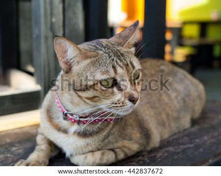 cute cat sleeping on wood table. selective focus - stock photo