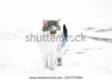 Cute cat walking on snow background - stock photo