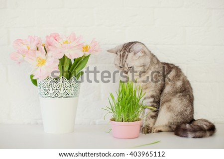 cute cat with tulips and grass