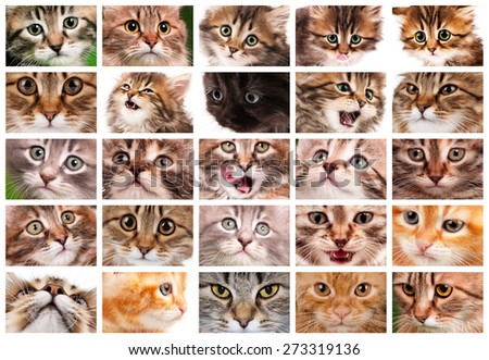 Cute cats and pretty kittens faces collage