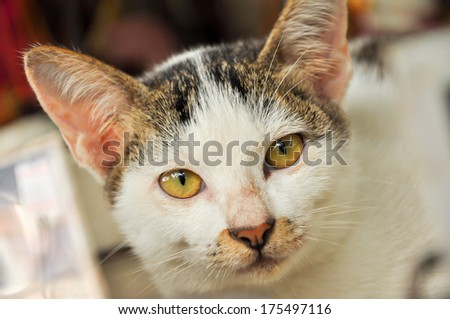 Cute cats on their shelves. - stock photo