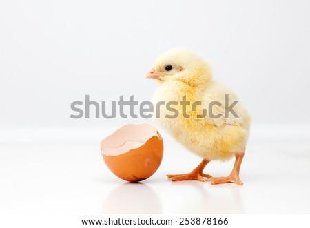 Cute chicken - stock photo
