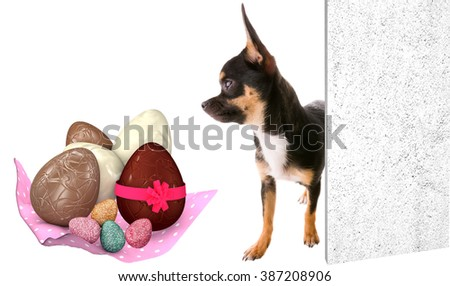 Cute chihuahua dog looking at the Easter eggs - stock photo