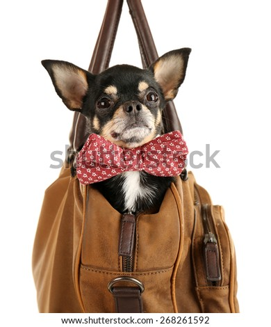 Cute chihuahua puppy sitting in brown bag isolated on white - stock photo