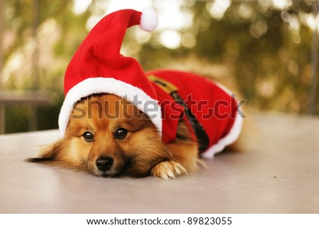 Cute Christmas dog - stock photo