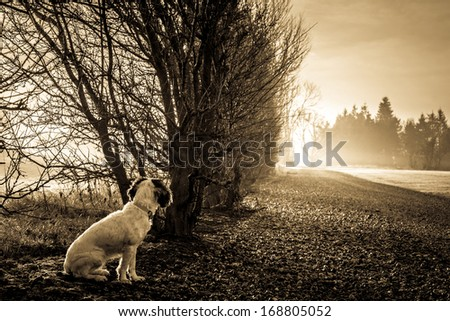 Cute Cocker Spaniel dog looking at sunlight at the end of the road - stock photo