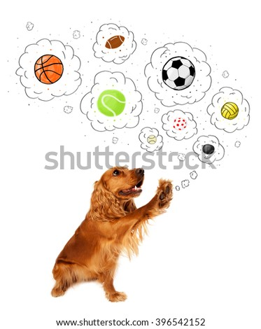 Cute cocker spaniel thinking about balls in thought bubbles above her head - stock photo
