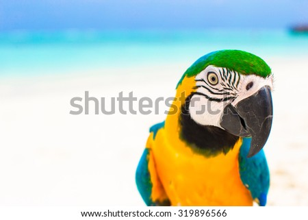 Cute colorful parrot on tropical white sandy beach on Maldives - stock photo