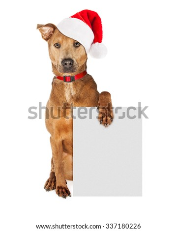 Cute crossbreed dog wearing a Christmas Santa Claus hat and red collar holding a blank sign to enter your marketing message on - stock photo