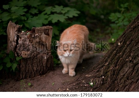 cute cuddly red furry cat portrait - stock photo