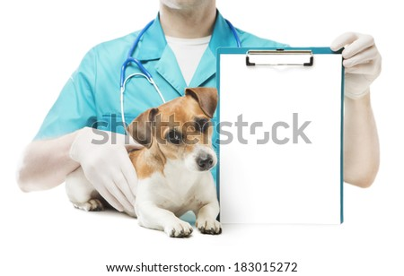 cute curious little dog lying near veterinarian man who holds office clip blank sheet of paper for your ad Text information. White background. Studio shot