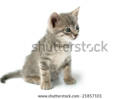 Cute curious little pussy isolated on a white background