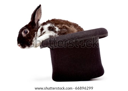 Cute dappled rabbit sitting in a black magician's hat - stock photo