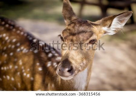 Cute deer - stock photo