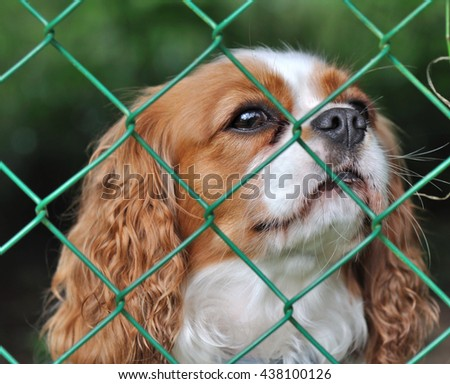 cute dog behind a fence with a wistful looking  - stock photo