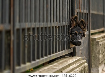 Cute dog behind fence - stock photo