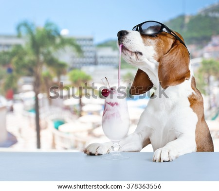 Cute dog drinking a cocktail in the bar at the resort - stock photo