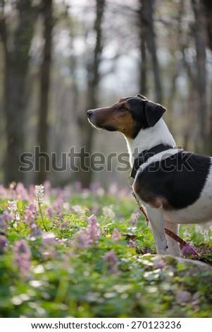 Cute dog exploring nature - stock photo