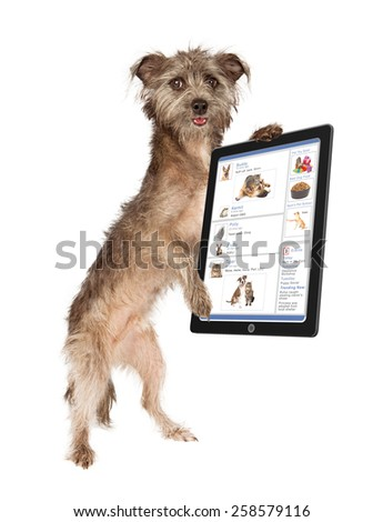 Cute dog holding a tablet computer scrolling through a social media website - stock photo