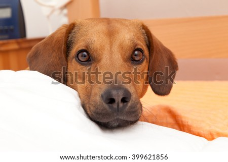 Cute dog in bed - stock photo