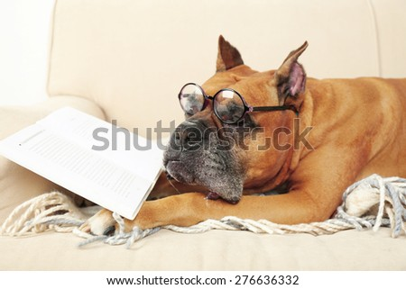 Cute dog in funny glasses and book lying on sofa, on home interior background - stock photo