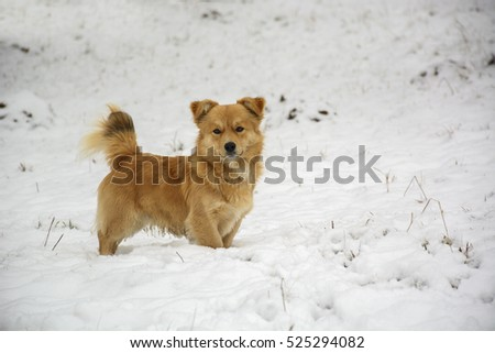Cute dog in the snow