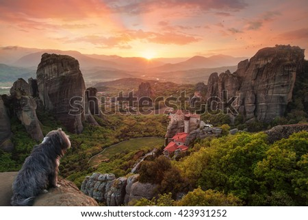 Cute dog is looking down the valley at sunset - stock photo