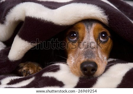 Cute dog is tucked in - stock photo