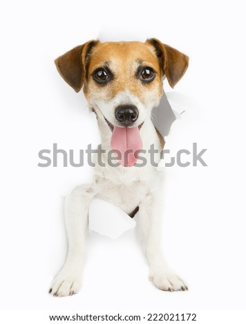 Cute dog looking at the camera broke the white paper. Empty space for your ad information - stock photo