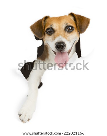 Cute dog looking at the camera to break the white paper. Place for your ad text