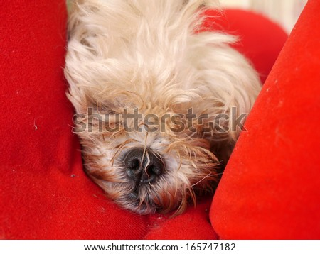 Cute dog on a red sofa. - stock photo