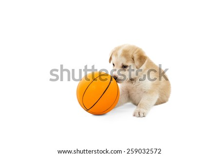 Cute dog playing with a ball toy against a white background - stock photo
