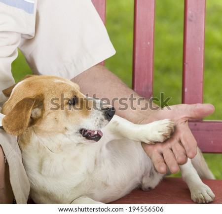 Cute dog playing with his owner hand  - stock photo
