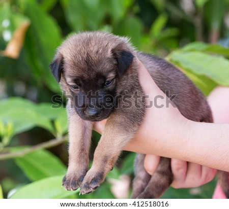 Cute dog puppy in human hands  Small young pet. Best friends. Animals and people - stock photo