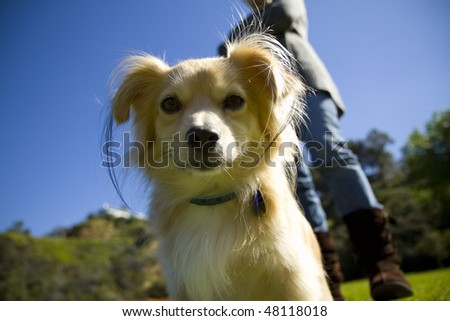 Cute dog showing attitude in park