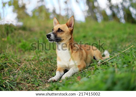 cute dog sitting in grass  - stock photo