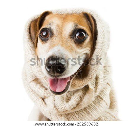 Cute dog smiling in a headdress - stock photo