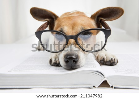 Cute dog tired student reading a book to teach lessons, falls asleep. Back to school - stock photo