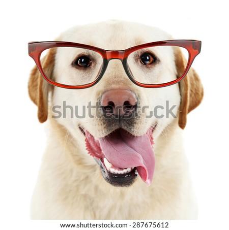 Cute dog with eyeglasses isolated on white - stock photo