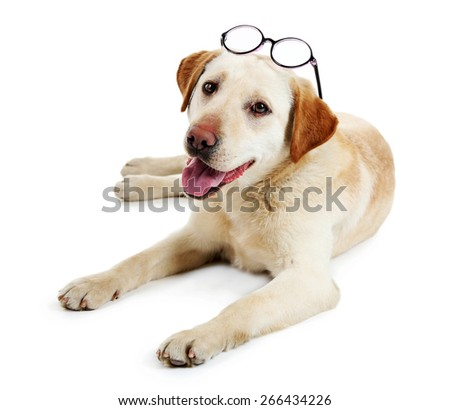 Cute dog with glasses isolated on white background