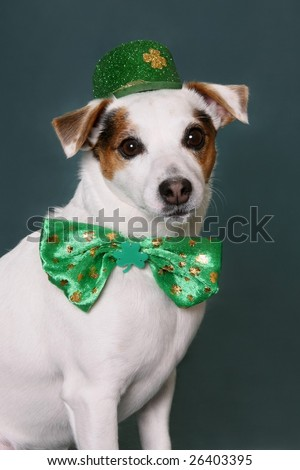 Cute dog with Saint Patrick's Day hat and Bow Tie